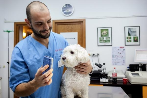 Cosmetica Canina Sector 6 Frizerie Caini Si Pisici Bucuresti