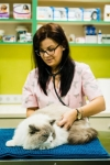 CABINET VETERINAR PANDA VET CARE